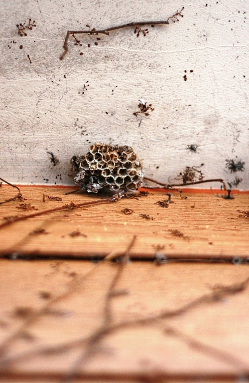 winter-wasps-nest
