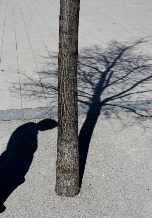 shadows-small