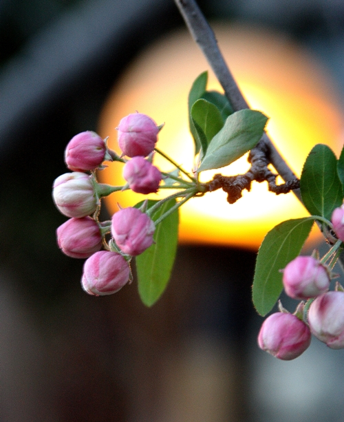 sunset-pink-flowers-small