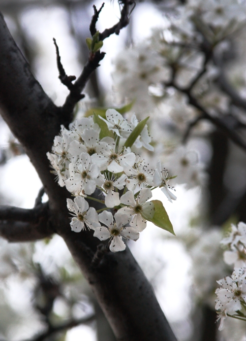 sunset-white-flowers-2