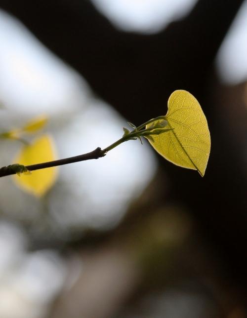 i-heart-spring-small