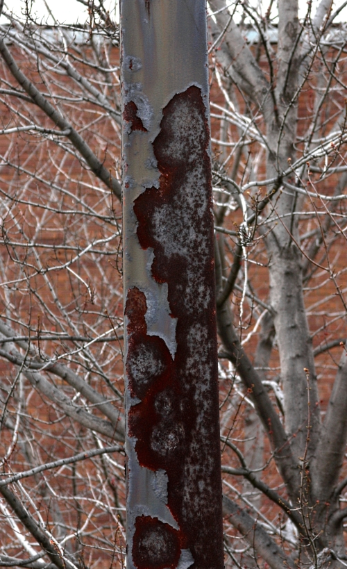 winter-rust-small