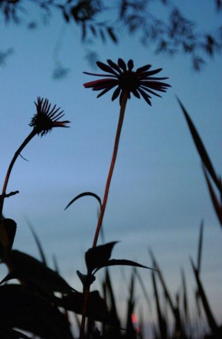 dusk flowers small