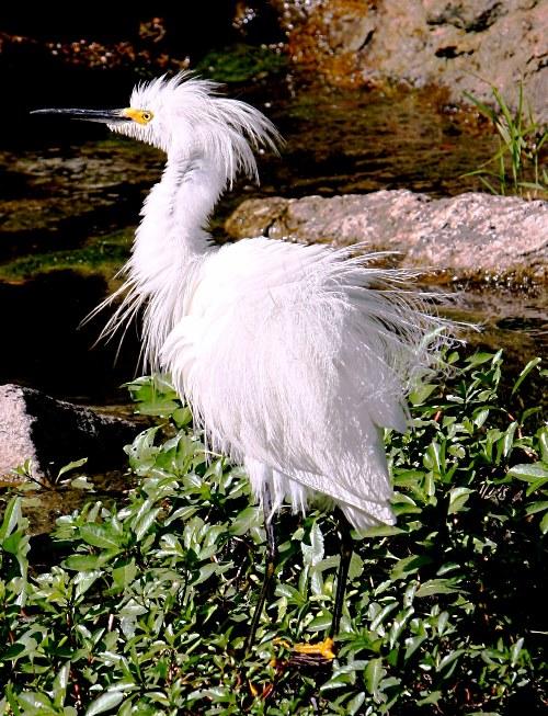 heron 2 small