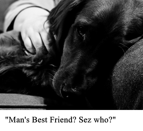 mans best friend small