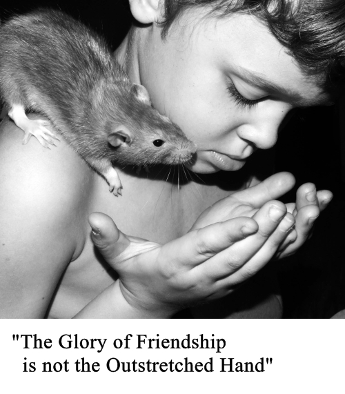 the glory of friendship small