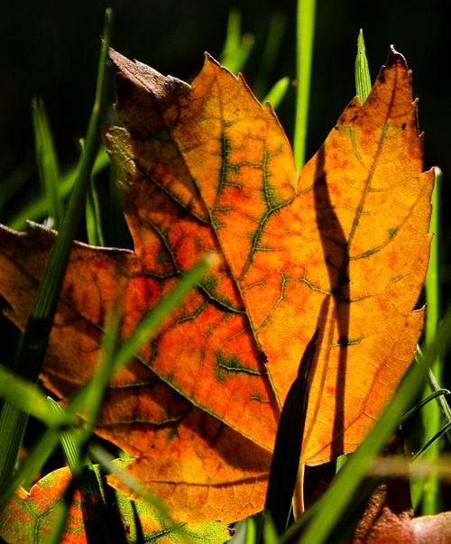 glowing leaf small