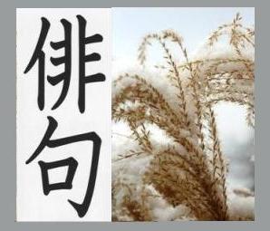 haiku image 3