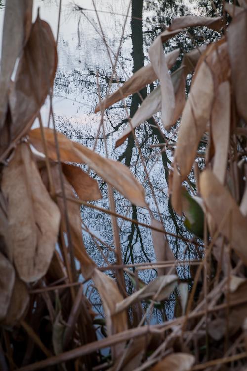 duck pond tower grove park-10