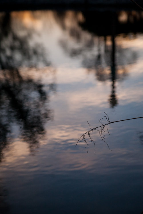 duck pond tower grove park-6