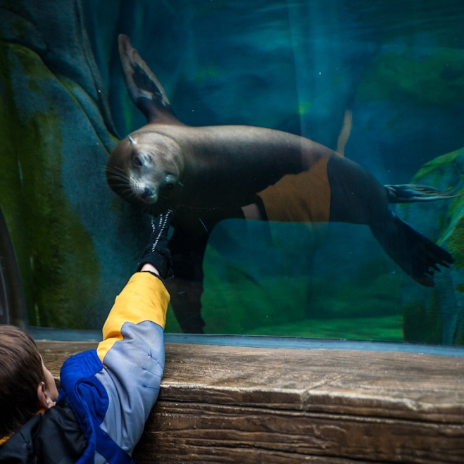 sea lion sound saint louis zoo st-1