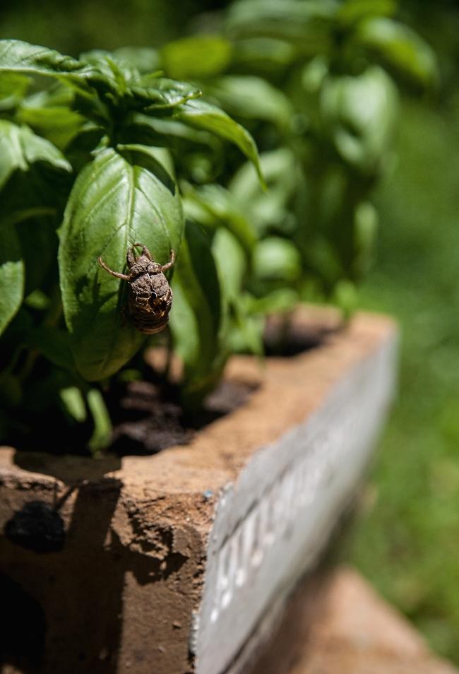 das haus garden-7 small