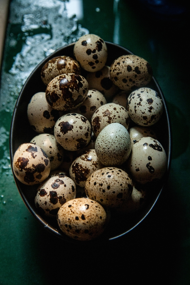 chickens quails eggs-17 small
