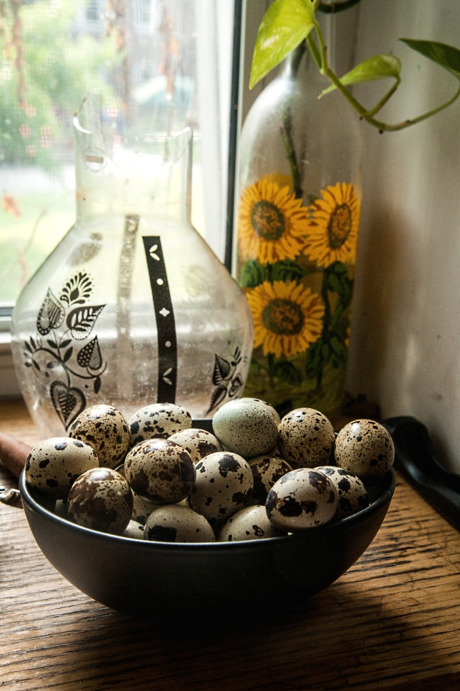 chickens quails eggs-18 small