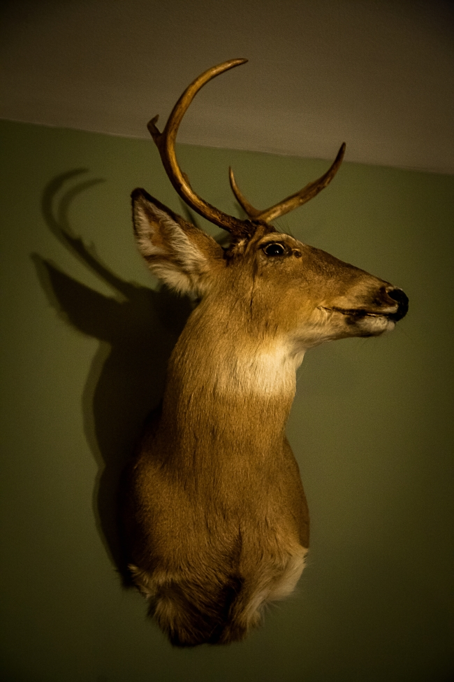 stag-1 small