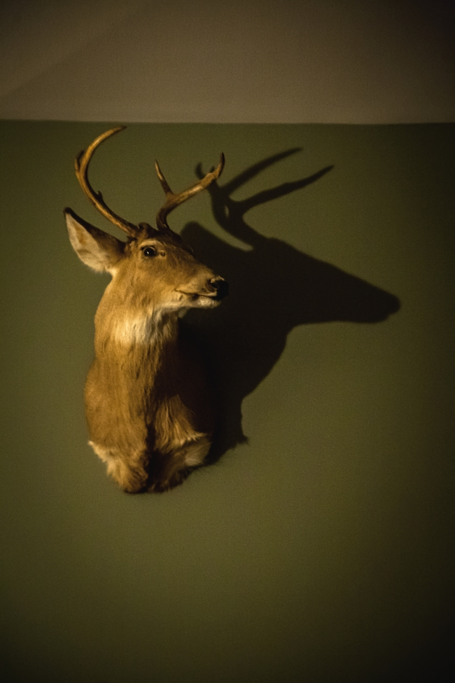 stag-3 small