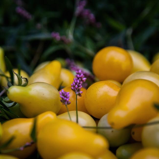 autumn garden-10 small