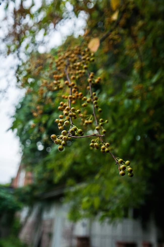 autumn garden-4 small