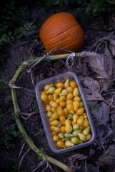 yellow tomatoes-4 small