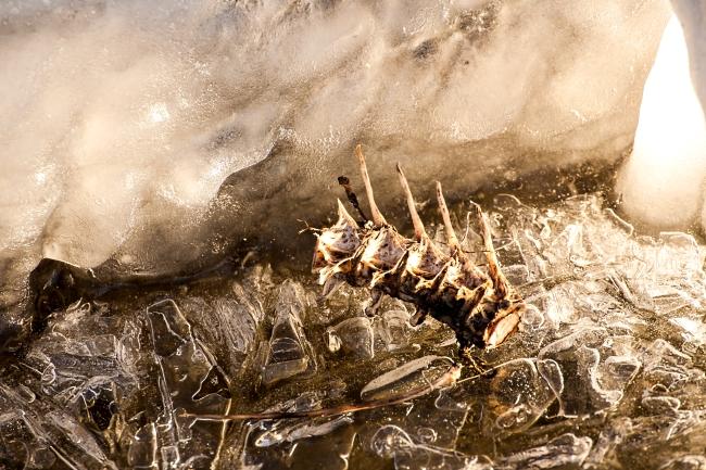 mississippi river ice freezing alton illinois-15 small