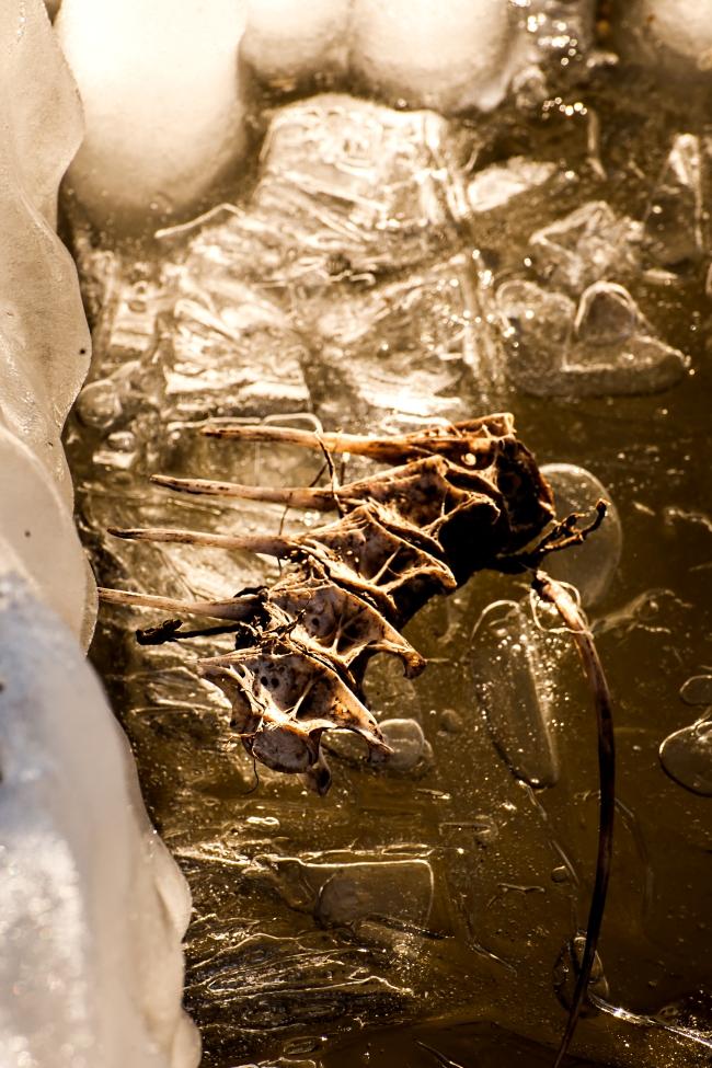 mississippi river ice freezing alton illinois-7 small