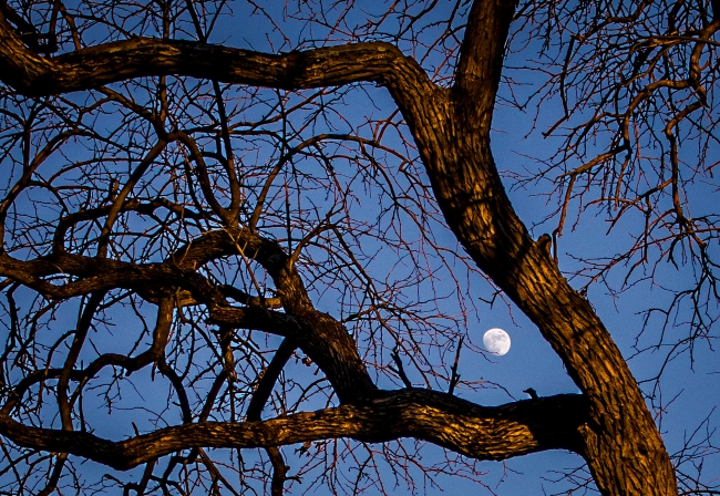 moon in trees-1 small