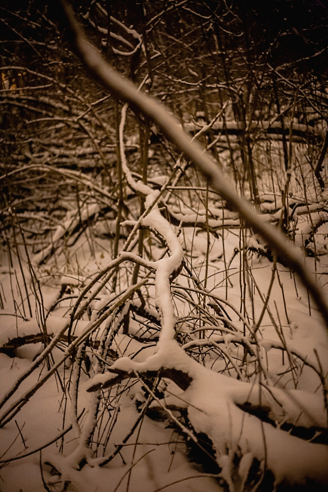 kennedy forest night snow saint louis-10 small