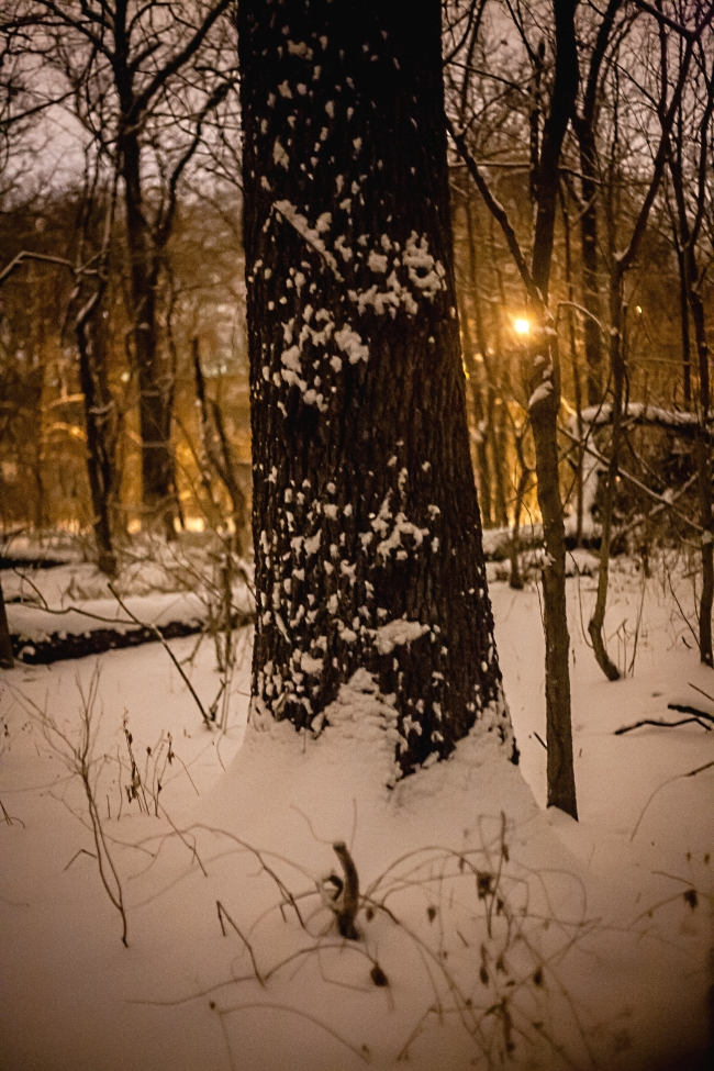 kennedy forest night snow saint louis-11 small