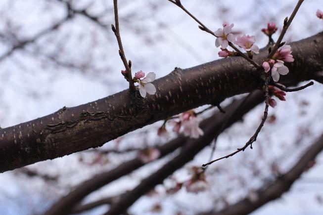 flowering trees 1