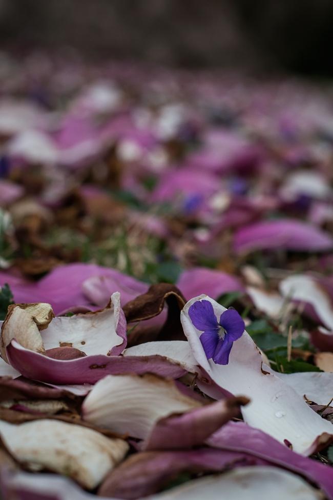 magnolia -1 small
