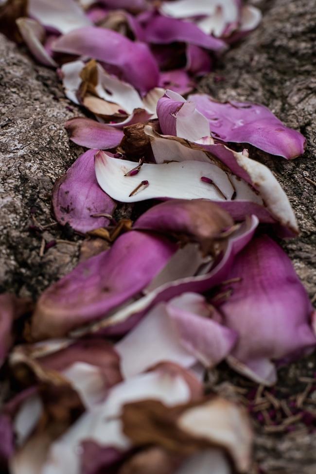 magnolia -4 small