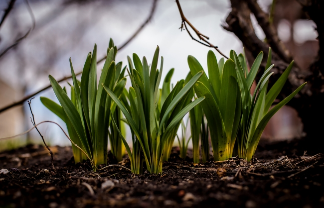 spring shoots-1 small
