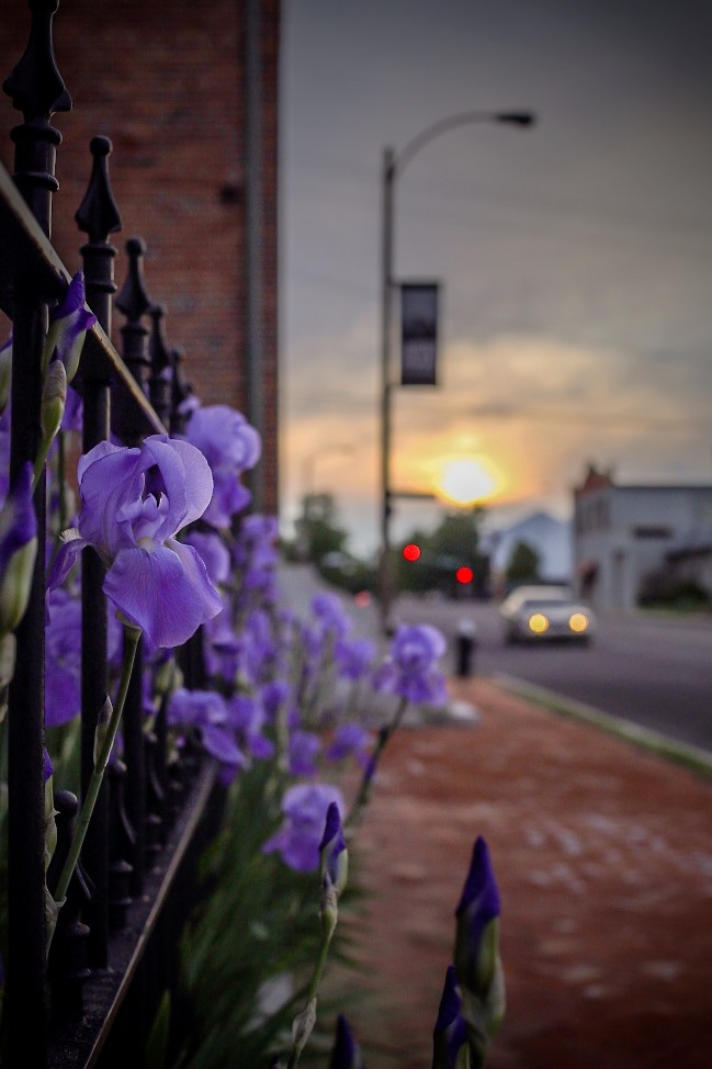 irises scott joplin house