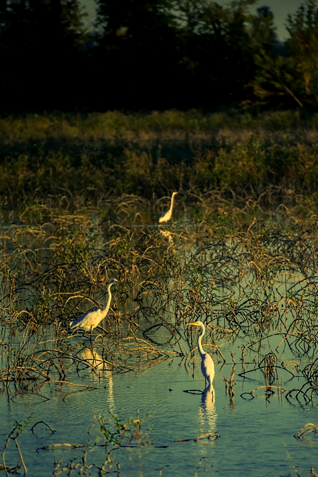 riverlands migratory bird sanctuary-1 small