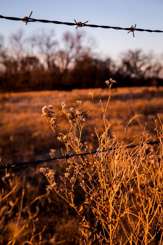 cattle field oklahoma sunset-3 small