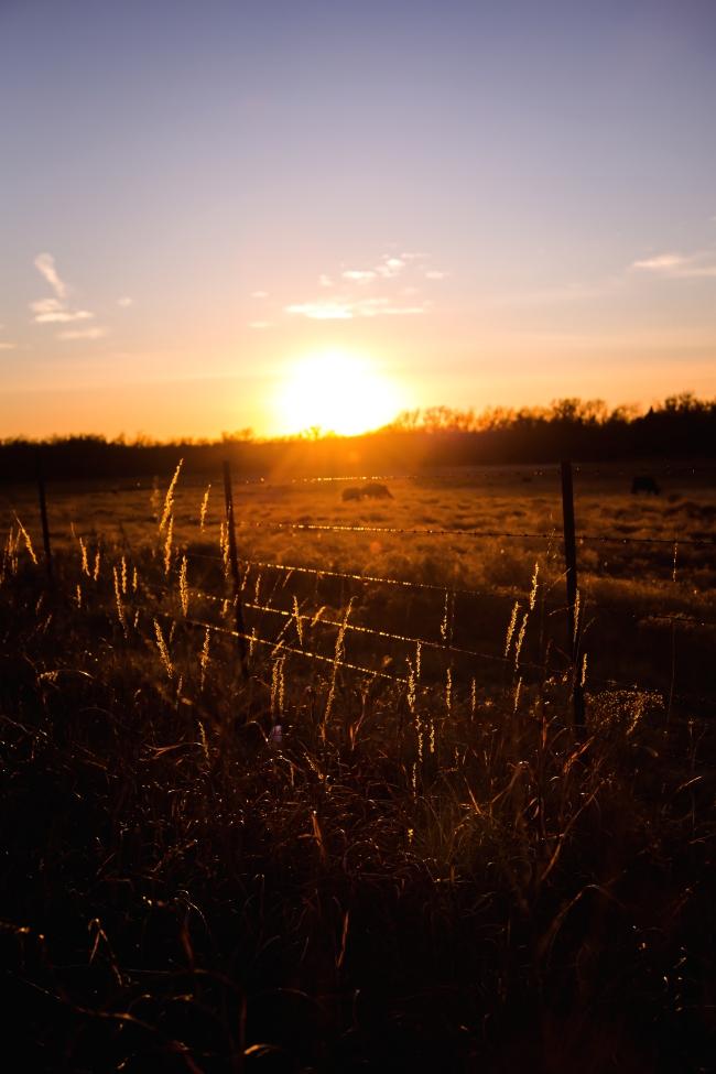 cattle field oklahoma sunset-6 small