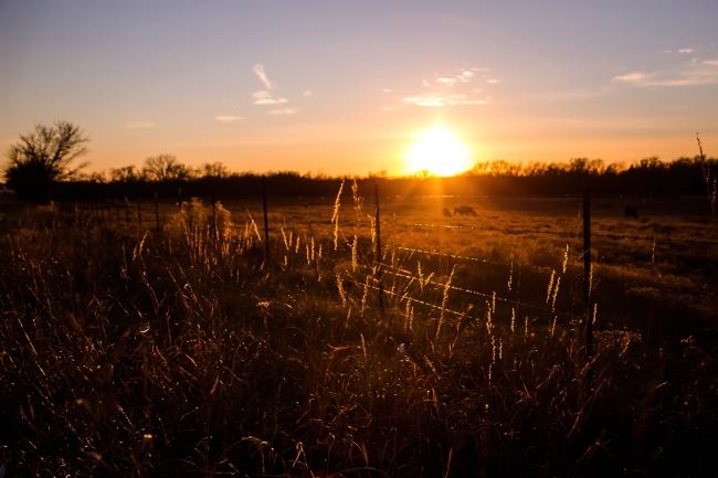cattle field oklahoma sunset-7 small
