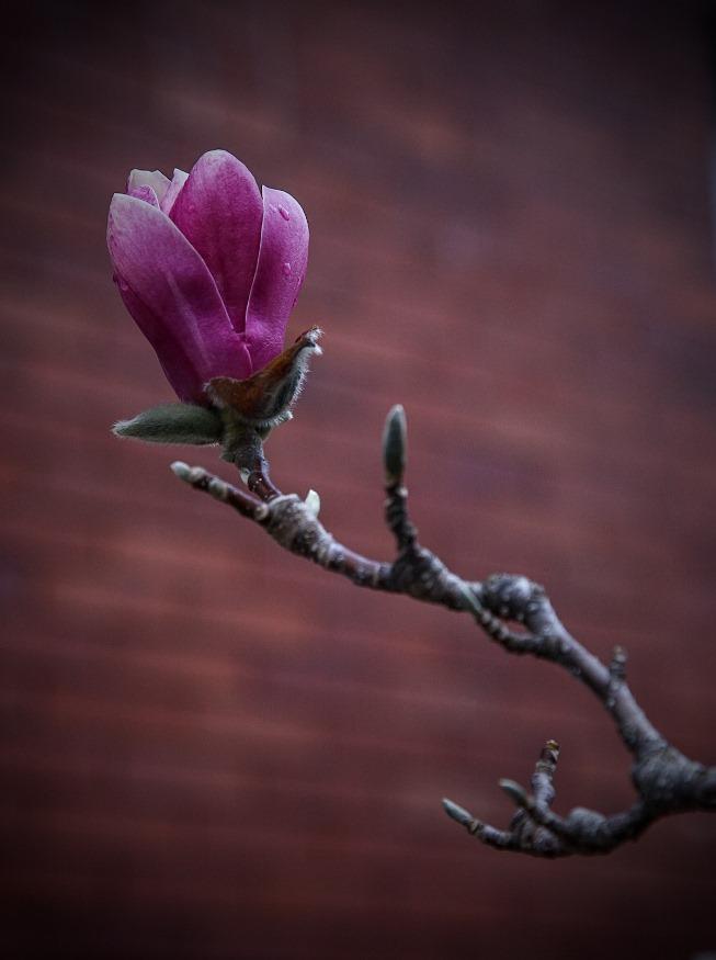 das haus magnolia 2