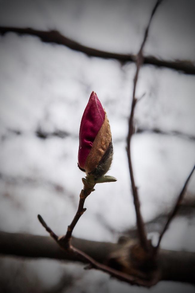 daus haus magnolia 3