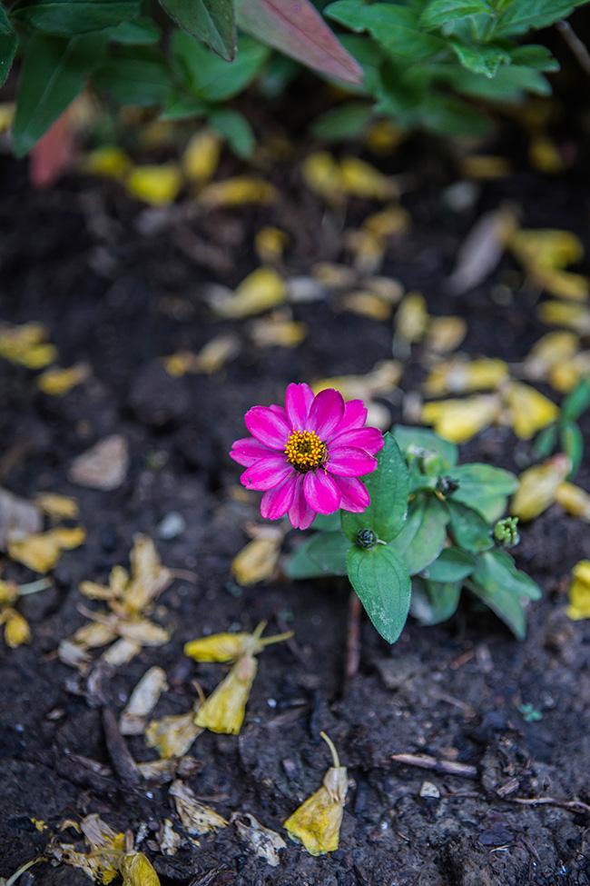 flowers in a damp garden-1 small