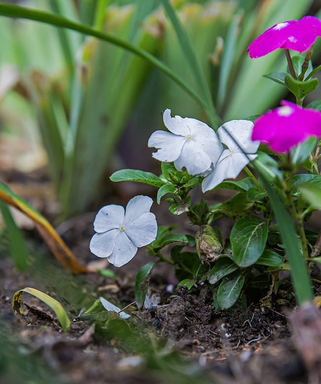 flowers in a damp garden-10 small