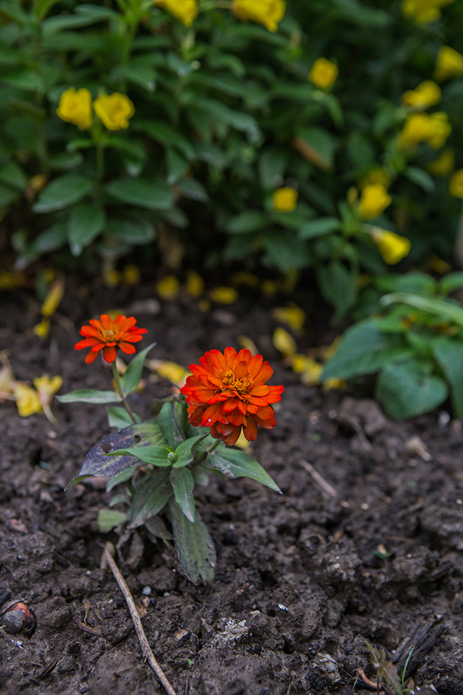 flowers in a damp garden-4 small