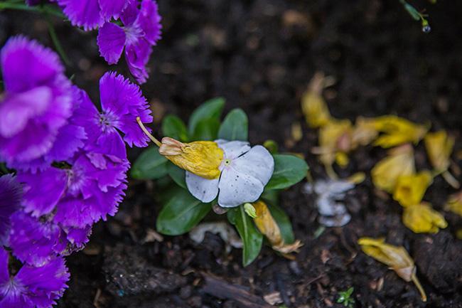 flowers in a damp garden-5 small
