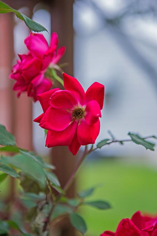 flowers in a damp garden-8 small