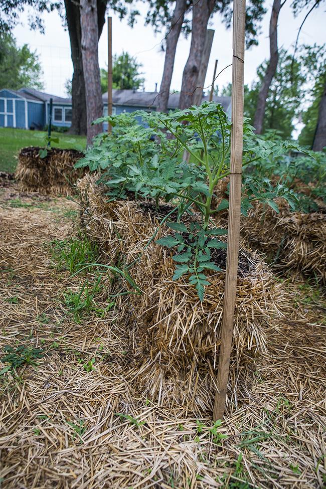 straw bale gardening-2 small