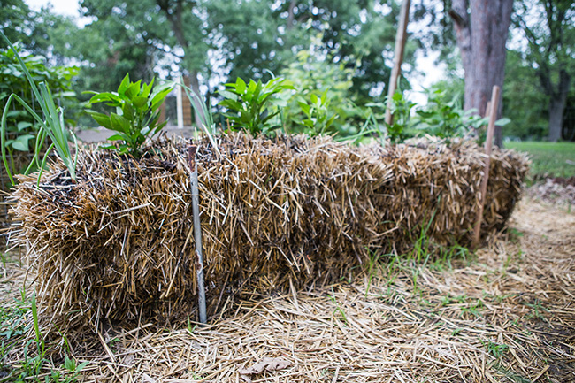 straw bale gardening-7 small