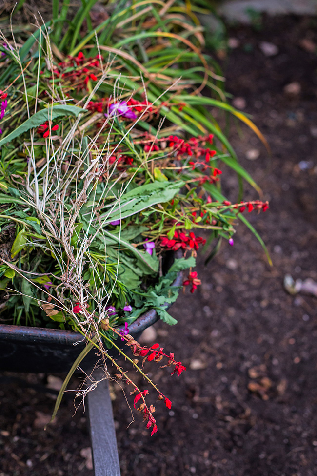 late garden-2 small