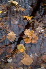 autumn mere-4 small