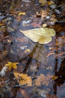 autumn mere-5 small