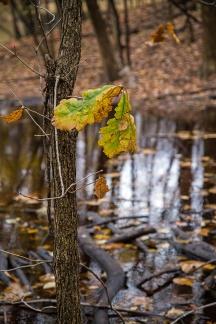 autumn mere-6 small